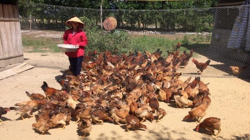 Có 2,7 ngàn lượt hộ cận nghèo ở Tuyên Hóa (Quảng Bình) được vay vốn đầu tư phát triển sản xuất kinh doanh.