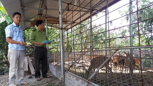 Lực lượng chức năng kiểm tra, hướng dẫn cơ sở gây nuôi Hươu sao ở Lục Ngạn, Bắc Giang.