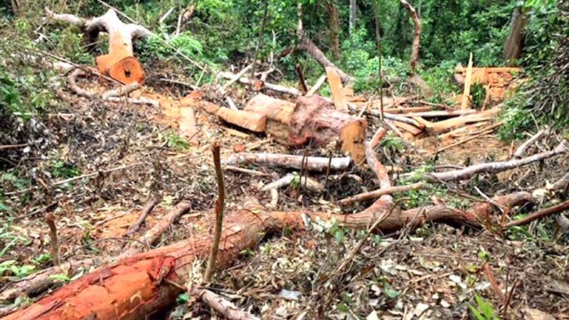 """Khởi tố đối tượng cầm đầu cùng 7 """"lâm tặc"""" tàn sát rừng gỗ quý Trường Sơn"""