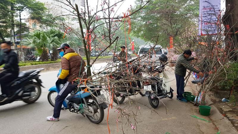 Văn phòng Chính phủ giải thích về chỉ đạo cấm chặt đào rừng chơi Tết