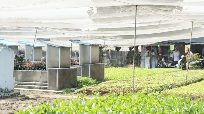 Diễn biến vụ trồng rau trên đất mộ tại Quận 12: Lãnh đạo TP HCM yêu cầu xử lý vi phạm