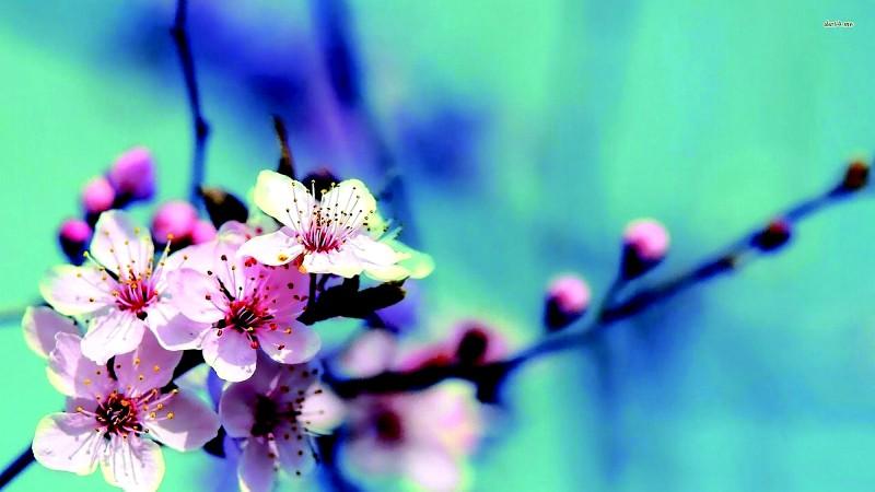 Tin ở mùa xuân