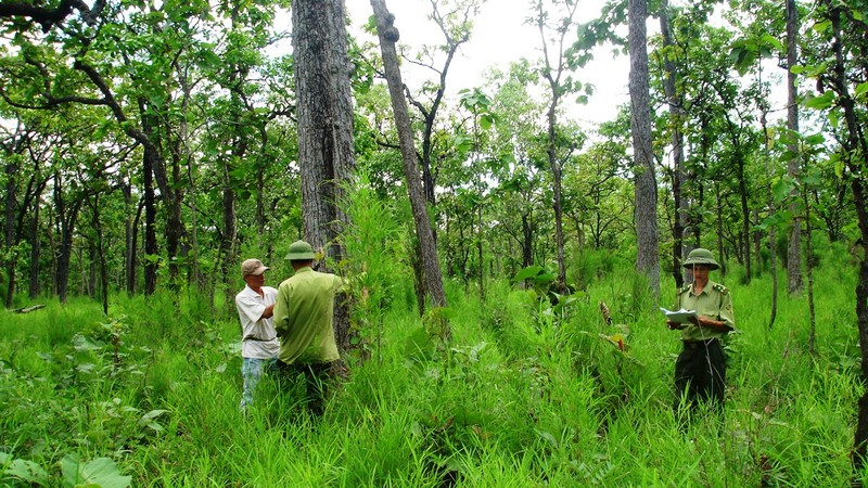 Chính sách đầu tư bảo vệ, phát triển rừng và thương mại lâm sản sẽ thống nhất. (Ảnh minh họa)