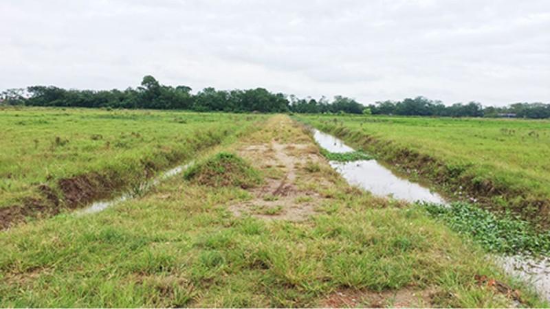 Nhiều đồng ruộng ở xã Phú Xuân trở thành những cánh đồng hoang.