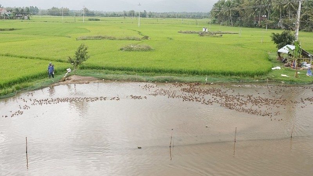 14ha đất không thể canh tác vì ảnh hưởng dự án.