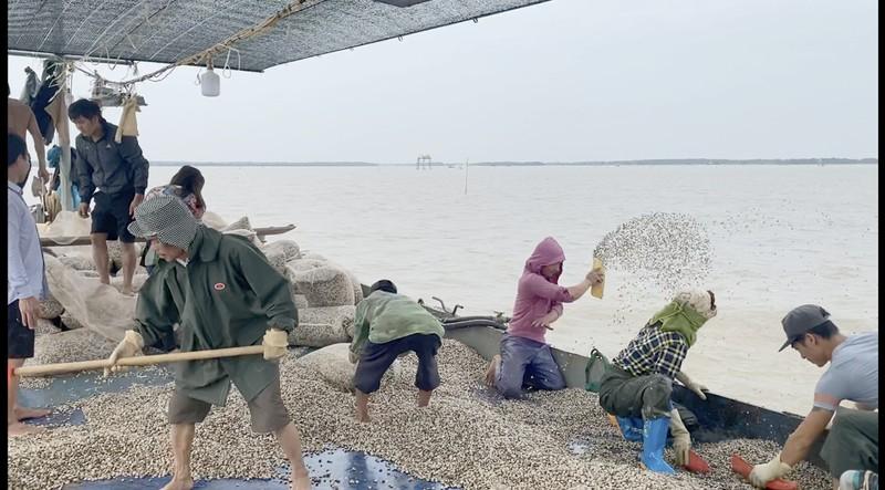 Tiếp bài 'cuộc chiến ngao - cát tại Tràng Cát': Cty Tân Vũ báo cáo không trung thực?