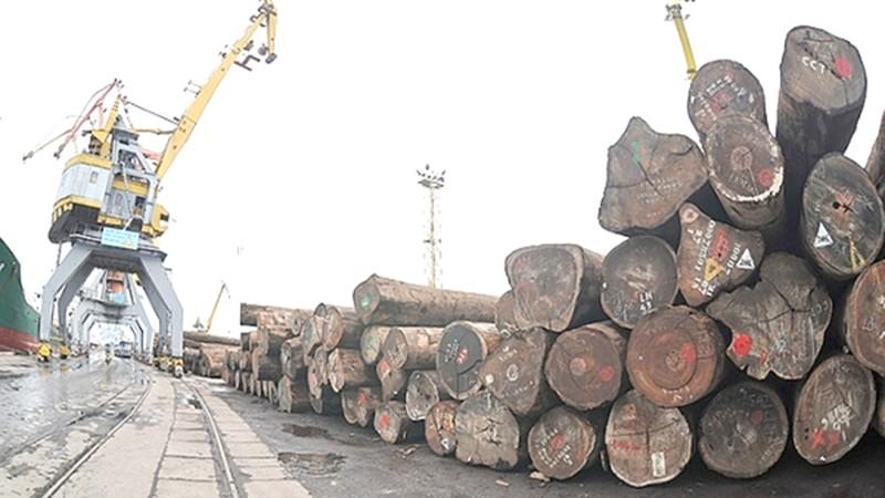 Rất ít doanh nghiệp nhập khẩu gỗ trực tiếp từ nhà khai thác mà đều phải qua khâu trung gian. (Ảnh minh họa)