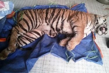 Bắt đối tượng chuyên buôn bán động vật hoang dã