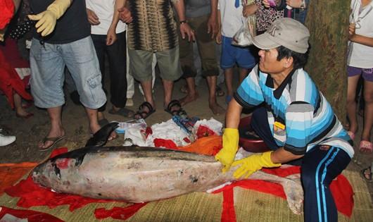 Lễ mai táng cá ông 80kg trôi dạt biển Cửa Hội
