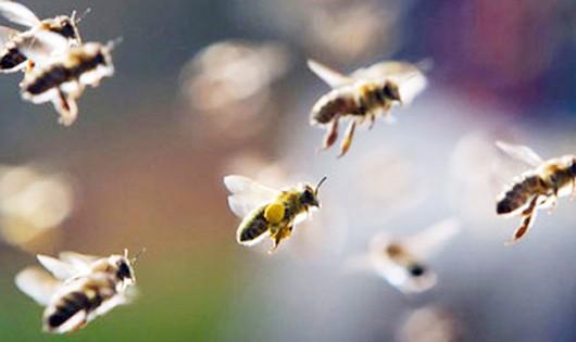 14 người bị ong tấn công khi đi thắp hương ở nghĩa trang