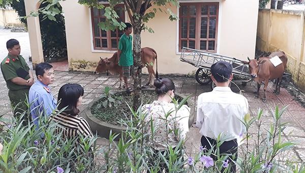 Tổ công tác nhiều thành phần cùng tham gia lấy mẫu bò để đi giám định ADN xác định huyết thống