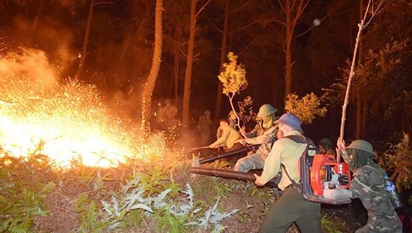 Cháy rừng xảy ra trong thời tiết gió Lào mạnh, rừng thông khô do không có mưa trong thời gian dài (ảnh CANX)