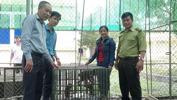 Cá thể khỉ vàng quý hiếm được gia đình bàn giao cho Vườn Quốc gia Vũ Quang chăm sóc.