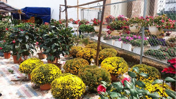 Thị trường hoa tết ở Nghệ An bắt đầu sôi động, đa dạng nhiều mẫu mã, chủng loại.