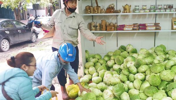 Chung tay 'giải cứu' rau củ cho nông dân Nghệ An