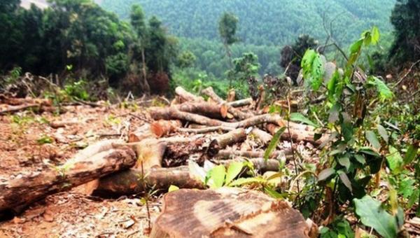 """Xử phạt gần 38 triệu đồng đối tượng """"triệt hạ"""" hơn 2.500m² rừng tự nhiên  """
