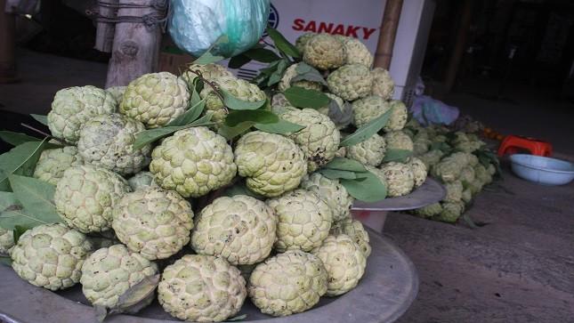 Người dân lo lắng việc thu mua này sẽ ảnh hưởng đến thị trường na Chi Lăng, loại cây xóa đói giảm nghèo ở địa phương.