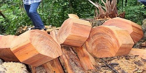 Cán bộ công an mua gỗ được phép khai thác cũng phạm tội... phá rừng?