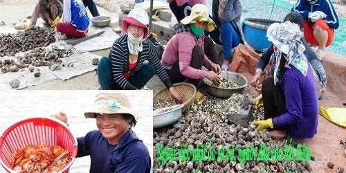 Mỗi lao động làm công việc phân loại ốc, đập vỏ, lấy ruột nhận mức thu lao từ 200.000 đồng - 300.000 đồng mỗi ngày.