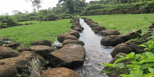 Mạch nước quanh năm cứ đổ về các khu ruộng.
