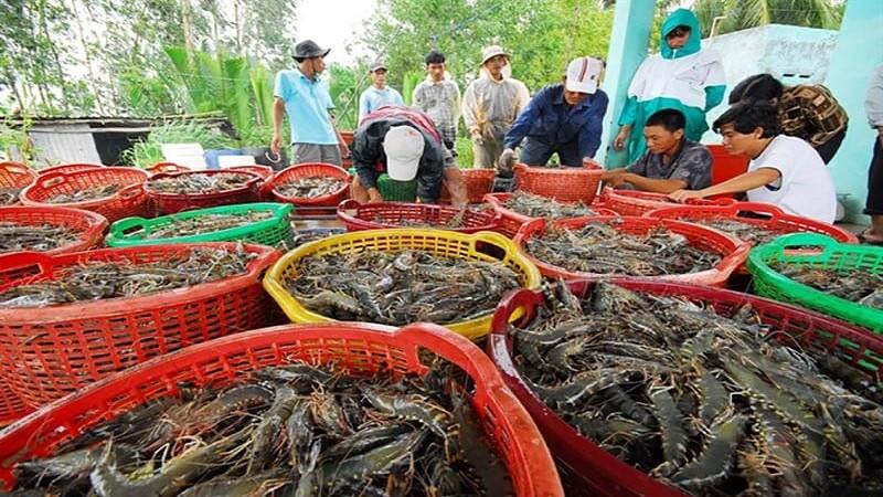 Cảnh báo loài vi rút nguy hiểm cho thủy sản có thể xâm nhập và Việt Nam