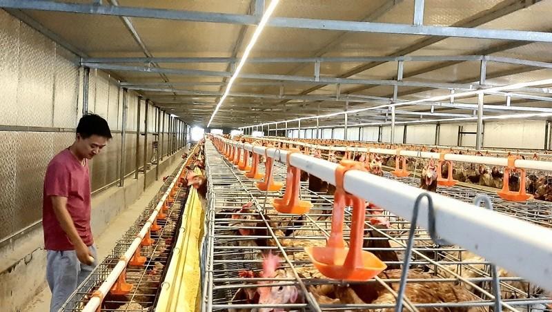 Chàng kiến trúc sư chuyên ngành xây dựng Bùi Minh Anh với đàn gà đẻ trứng thảo dược 15 nghìn con.