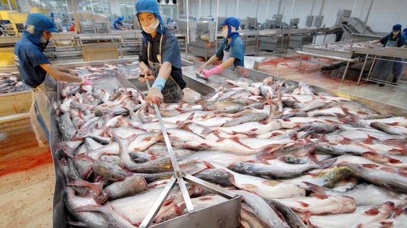 Chính phủ chỉ đạo theo dõi tình hình ách tắc xuất khẩu thủy sản sang Trung Quốc