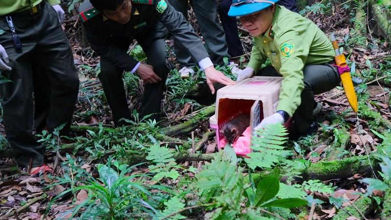Tái thả động vật hoang dã tại VQG Cúc Phương.