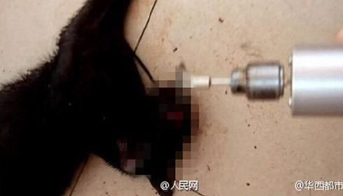 """2 sinh viên giết hại dã man một con mèo khiến """"dân mạng 'dậy sóng"""""""
