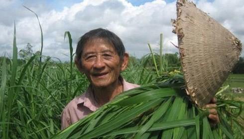 Anh hùng lao động Hồ Giáo