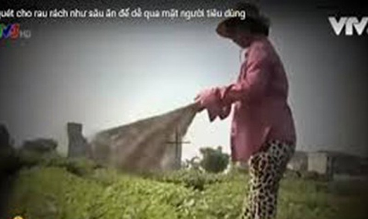 """Hình ảnh trong phóng sự """"Cây chổi quét rau"""" phát trên VTV3."""