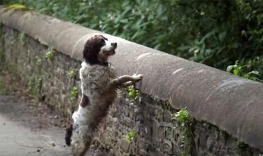 """Nhà ngoại cảm Mary Armour từng dắt con chó giống Labrado qua cây cầu. Cô không hề linh cảm thấy một bóng ma nào nhưng lại có cảm giác """"bình tĩnh và thanh thản"""". Mary thừa nhận con chó cũng kéo cô về phía bên phải của cây cầu. Ảnh: Youtube."""