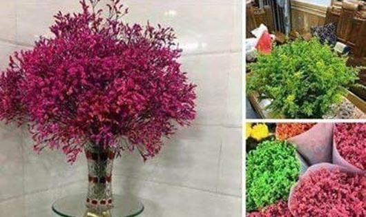 Ẩn họa khôn lường khi trưng hoa sao khô dịp Tết