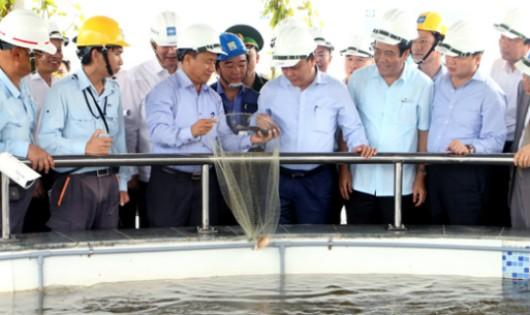 Thủ tướng Chính phủ Nguyễn Xuân Phúc cùng đoàn kiểm tra thị sát bể nuôi cá sinh thái chứa nước thải đã xử lý tại FHS.