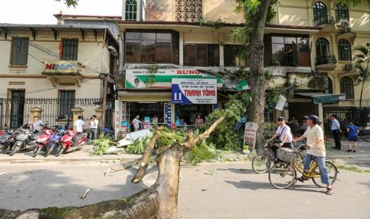 Vụ tai nạn đã khiến phố Phan Huy Chú bị ngăn cách vì thân cây chắn ngang đường. (Ảnh: Minh Sơn/Vietnam+)