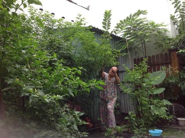 Bố mẹ Hà Tăng dành nhiều diện tích trong khu đất đang ở để trồng cây và nuôi gia cầm.