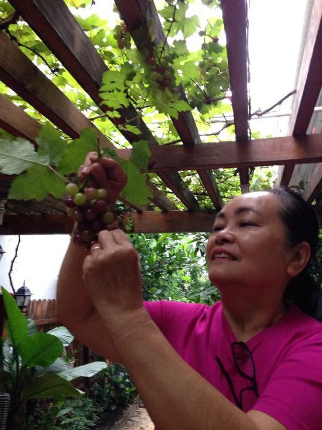 Nhà bố mẹ ruột của Tăng Thanh Hà trồng rất nhiều nho.