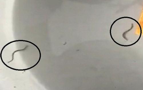 Sinh vật giống con đỉa có trong nước máy ở Quảng Ninh. Ảnh: Cắt từ Clip