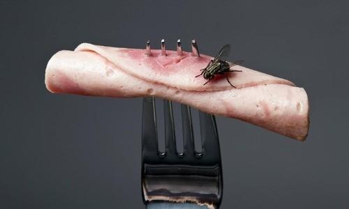 Điều gì xảy ra khi ruồi đậu vào thức ăn của bạn