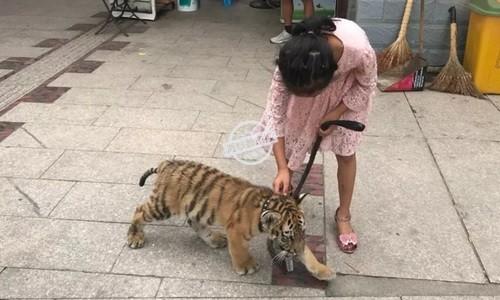 Bé gái dắt hổ đi dạo gây kinh ngạc ở Trung Quốc
