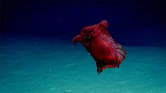 """Lần đầu tiên phát hiện """"quái vật gà không đầu"""" ở Nam Cực - Ảnh 1."""