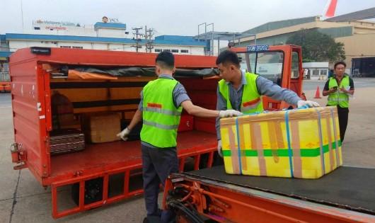 Sa thải 2 nhân viên bốc xếp ở sân bay Tân Sơn Nhất