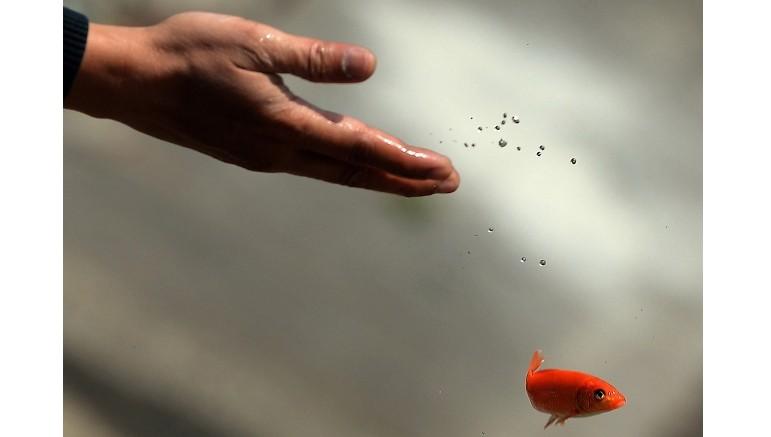 Thả cá chép ngày ông Công ông Táo có tiêu trừ được nghiệp chướng?