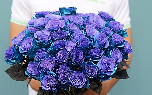 Hồng phủ2 màu xanh tím Lazurite nhập từ Hà Lan khá đắt khách dịp 8/3. Ảnh: Flowerbox.