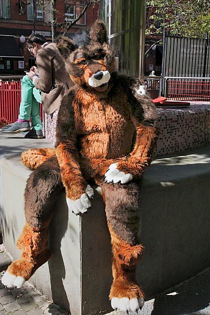 Đôi khi anh cũng mặc thử trang phục của chó ra ngoài đường. Ảnh:ladbible.