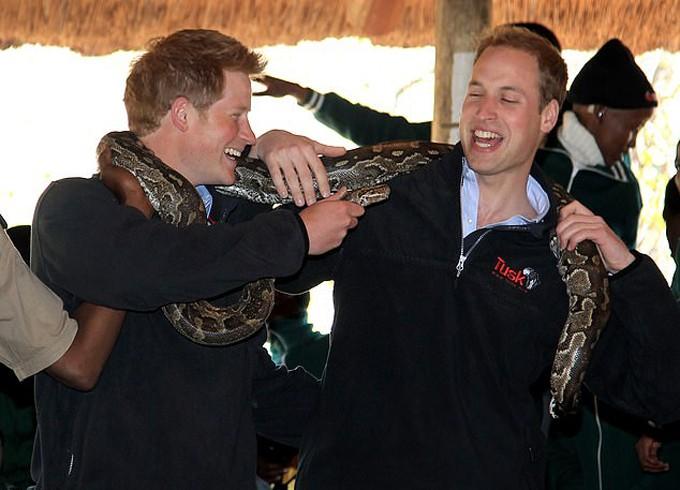 Harry nghịch ngợm cầu đầu một con tăn dí vào người anh trai trong chuyến đi đến châu Phi năm 2010.