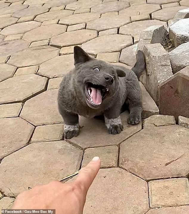 Chó Dúi ở Việt Nam gây bão mạng xã hội quốc tế - Ảnh 2.
