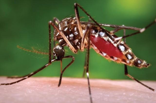 Quốc gia nào chỉ có duy nhất một con muỗi? - 1