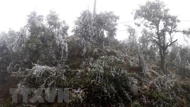 Băng tuyết bao phủ trên các cành cây. (Ảnh: Quốc Khánh/TTXVN)