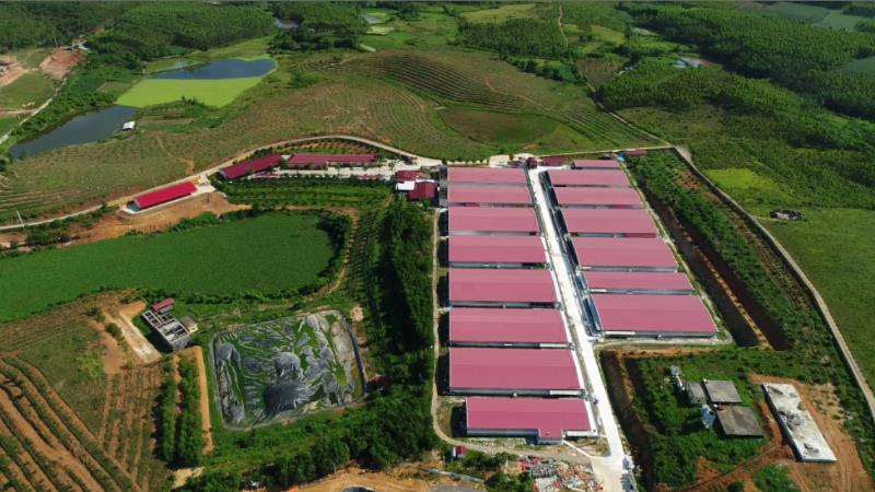 Phạt Công ty Cổ phần Tập đoàn Dabaco Việt Nam 300 triệu đồng